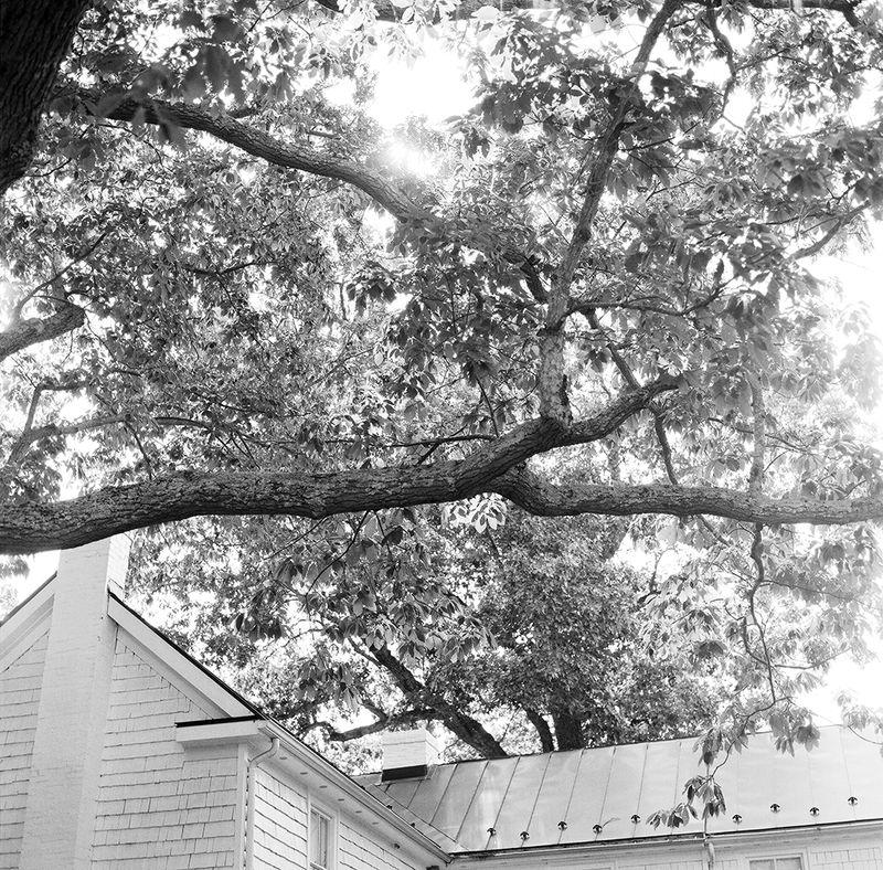 Meredith_montague_tree