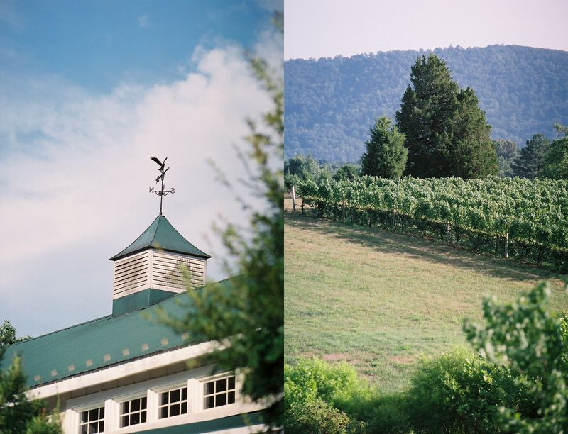 Meredith_montague_weathervane_vines