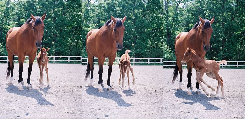 Meredith_montague_foal_action