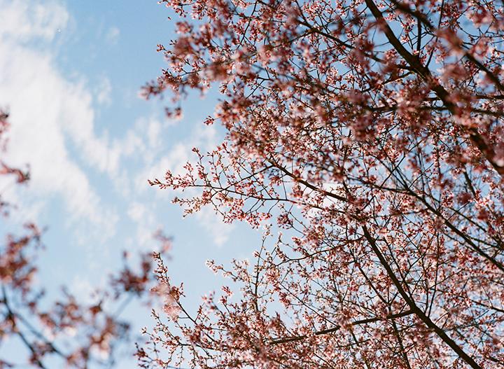 Meredith_montague_cherrytree