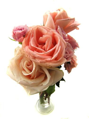 2007_valentines_roses_0017x