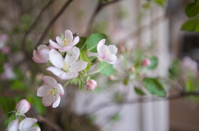 Garden_week_375